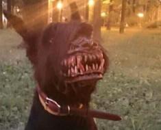 Este perro no está RABIOSO, simplemente lleva el accesorio más DIVERTIDO de todos los tiempos