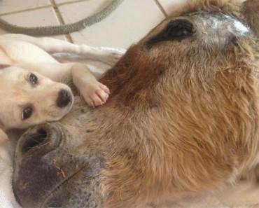 Este burro que había sido dado por muerto encuentra consuelo en un pequeño amigo
