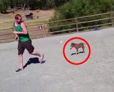 Este es el caballo más pequeño que EXISTE. No lo creerás cuando lo veas correr