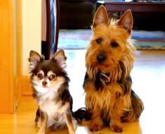 """Mamá pregunta: """"¿Quién se ha hecho caca en la cocina?"""" Vea lo que hace el perro de la derecha"""