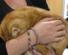 Esta gata está tan asustada en el refugio que no muestra ni su cara