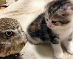 Este gatito acaba de conocer a este búho, lo que sucedió después HAY QUE VERLO