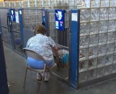 Esta mujer lee a los perros de un refugio para que sepan que no están solos