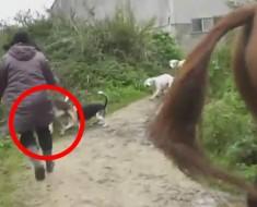 Mujer salva a un zorro de una jauría de perros y cazadores. ¡Qué VALIENTE!