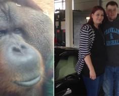 Orangután no dejaba de mirarlos. Cuando se enteraron de la razón... ¡Oh, Dios mío!