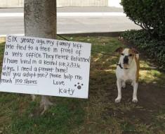 perra-espera-adopcion-1