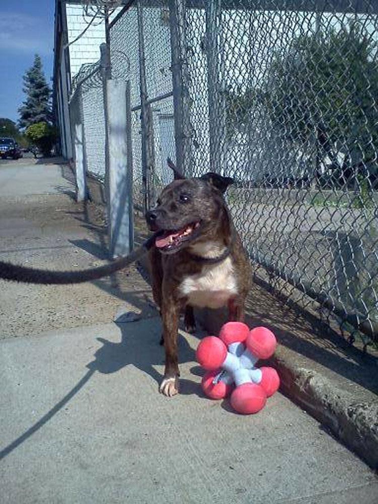 Este perro ha vivido en un refugio durante 11 Años. Y nunca ha tenido una familia