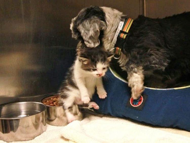 Rescatan a este perro de un barranco, NO CREERÁ lo que estaba escondido allí abajo