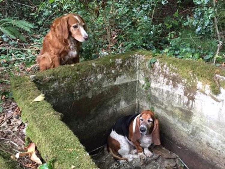 Dos perros desaparecen en el bosque, hasta que un extraño ve la IMPRESIONANTE verdad...
