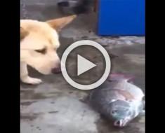 Este perro ve un pescado tirado en el suelo. Lo que hace después me IMPACTÓ POR COMPLETO