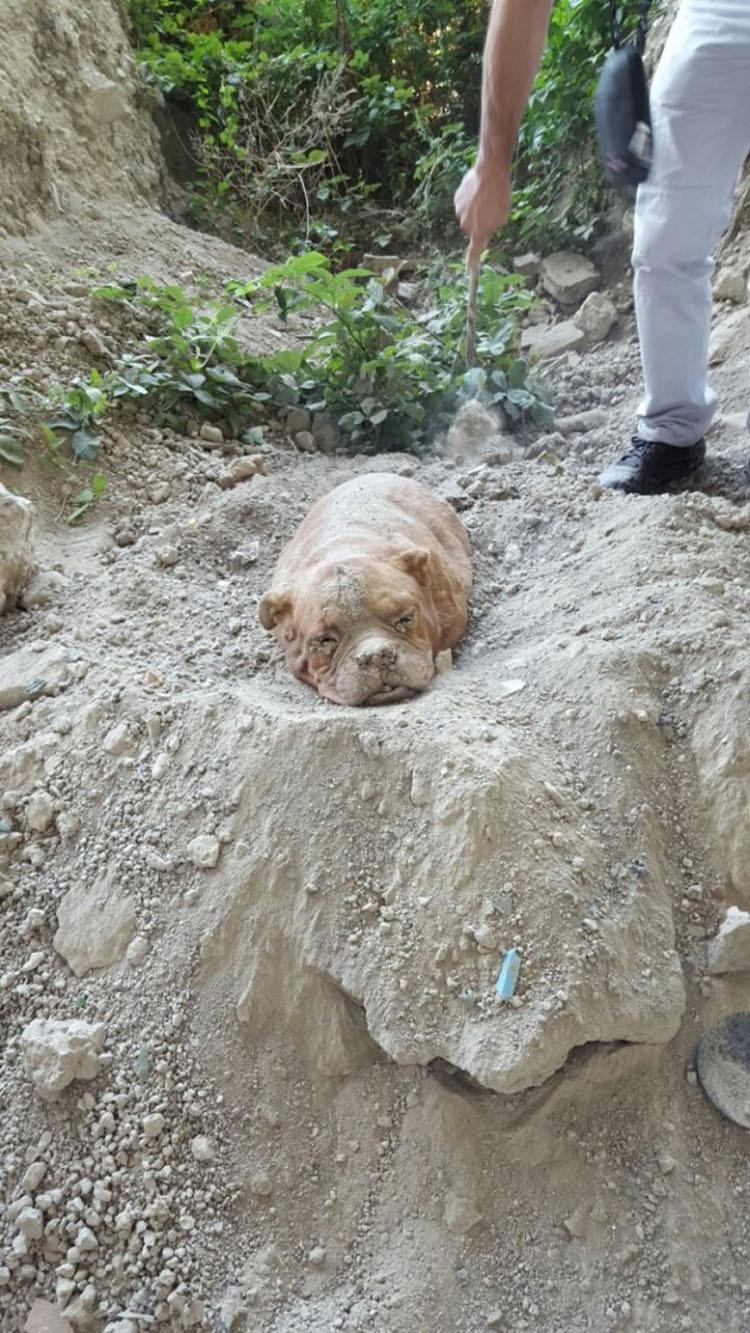 El hombre que enterró a este perro VIVO pensaba que nadie la encontraría
