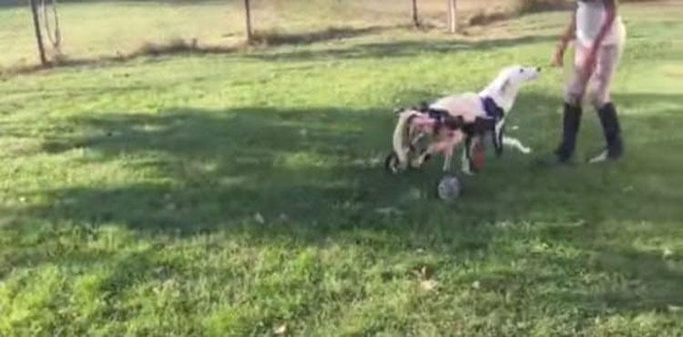 """Este perro """"roto"""" estaba tirado como basura. Ahora vea lo que pasa cuando aparecen unas BUENAS PERSONAS"""