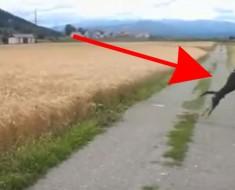 Cuando veas a este perro correr a través de un campo te pondrá del MEJOR HUMOR