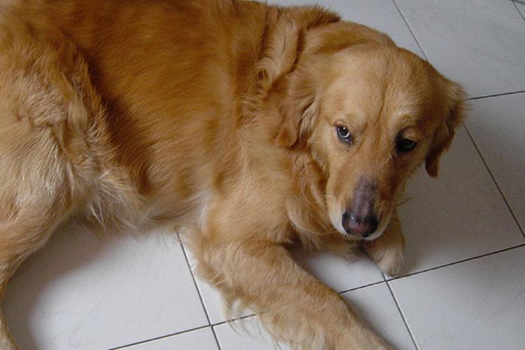 Esta perro aparecía en su puerta todas las tardes, ¡pero nunca esperó la nota que llevaba de collar!