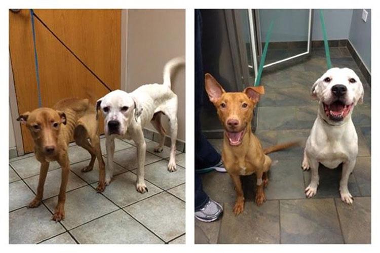 2 perros EN LOS HUESOS se transformaron gracias al AMOR. Esta es su historia