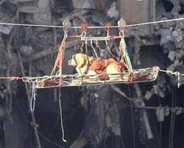 Recordando la valentía de los perros de rescate del 11 de Septiembre