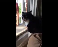 Traen un nuevo perro y ASÍ es como reacciona el gato de la casa. Sus sentimientos no pueden ser más claros
