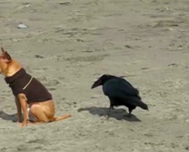 recopilacion-perros-playa