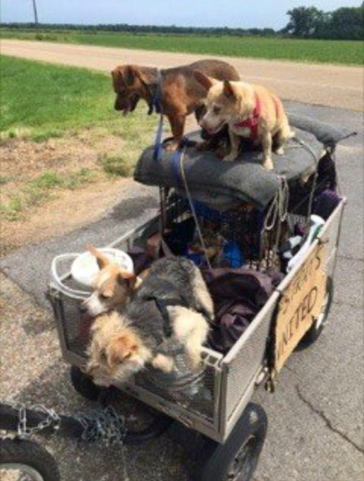 Ella vió a un hombre sin hogar haciendo esto a 10 perros callejeros, y ahora es VIRAL...