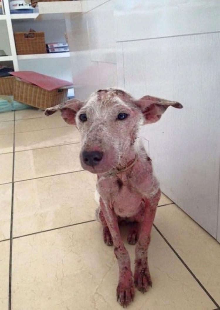 Una perrita maltratada saltó a su coche. Lo siguiente cambió sus vidas...