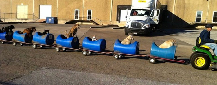 Este anciano ha construido un tren para perros rescatados para que vivan pequeñas aventuras