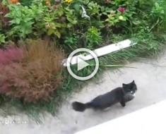 El dueño de este gato tiene una manera única de traerlo a casa. ¡Es un GENIO!