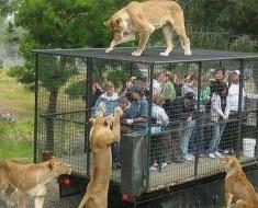 Un zoo inteligente sabe exactamente quienes deberían estar en jaulas