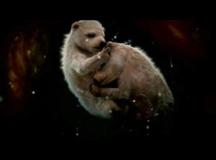 14 fotos de animales dentro del útero que muestran el milagro de la vida como nunca has visto antes