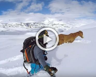 Este caballo salvaje estuvo 4 días atrapado en la nieve. Mira cuando un extraño se acerca