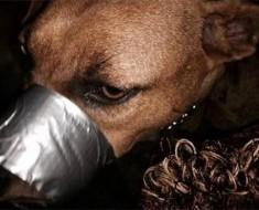 carcel-crueldad-animal-1