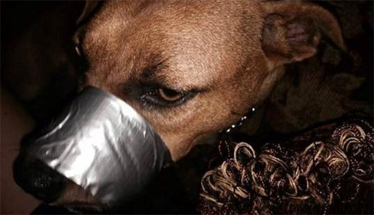 """La """"broma"""" de esta mujer a su perrita hizo que acabara en la cárcel por crueldad animal"""
