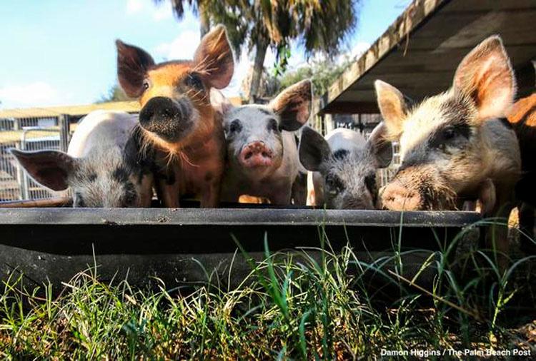 Cientos de vidas salvadas en la operación más grande de la historia contra la crueldad animal