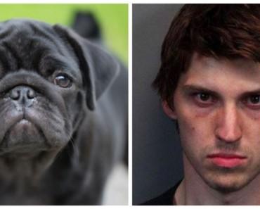 crueldad-sadismo-perros