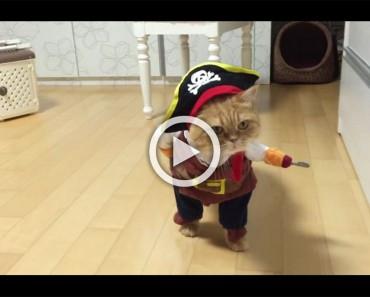 Este gato tiene el disfraz de Halloween más grande de todos los tiempos. En el segundo 0:08 te morirás de risa