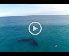 Pilotaba su drone y vió a alguien haciendo paddle surf... ¿Pero qué HAY A SU LADO?