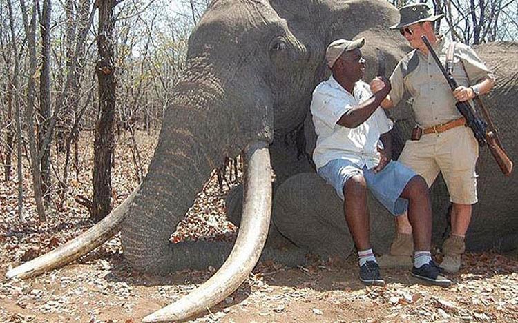 EXCLUSIVA: Matan al elefante más grande de África de los últimos 30 años