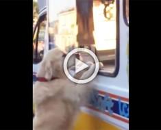 Este perro y el hombre de los helados tienen el entendimiento más dulce y adorable