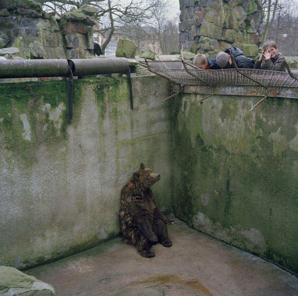 Esta IMPACTANTE fotografía resume la tristeza de los animales de los parque zoológicos