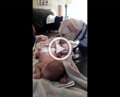 Cuando éste perro se da cuenta de que el bebé duerme sin manta, hace la cosa MÁS TIERNA Y DULCE