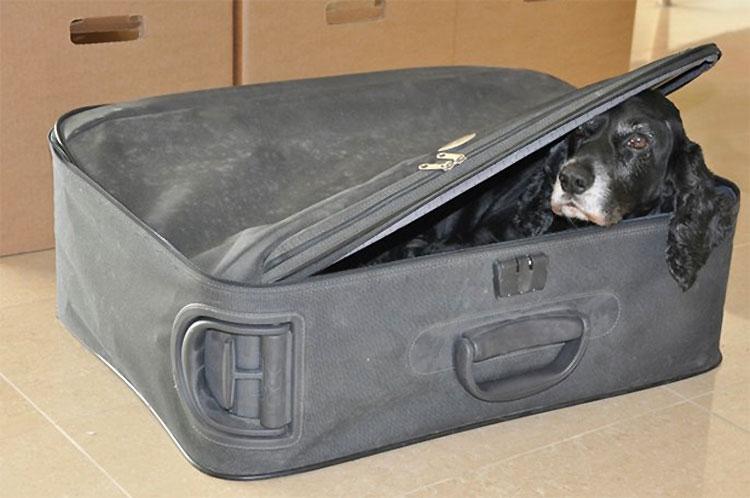 Trajo una maleta al hospital. Cuando las enfermeras vieron lo que había dentro se pusieron a LLORAR... 1