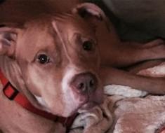 Este perro mayor fue abandonado debido a que su dueño tenía una alfombra nueva
