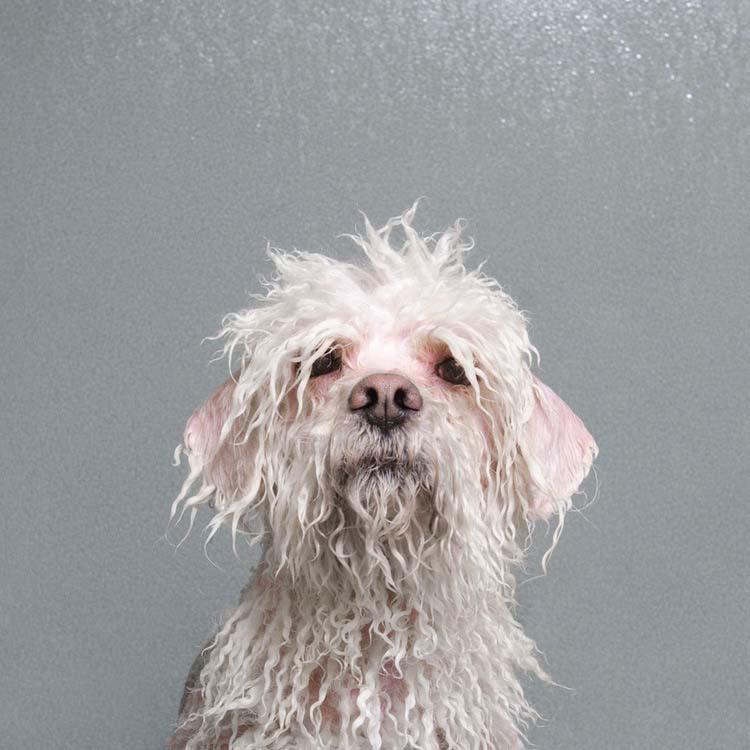 """Siente como tu corazón se funde en el baño de burbujas de esta serie de fotos de """"Perros mojados"""""""