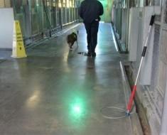 Esta inquietante foto muestra a un perro no deseado de un refugio en su último paseo