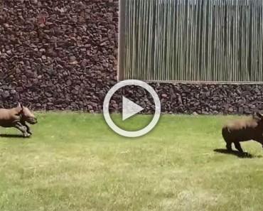 ¿Has visto alguna vez rinocerontes bebés correr como perritos? Este vídeo es lo más adorable que verás en todo el día