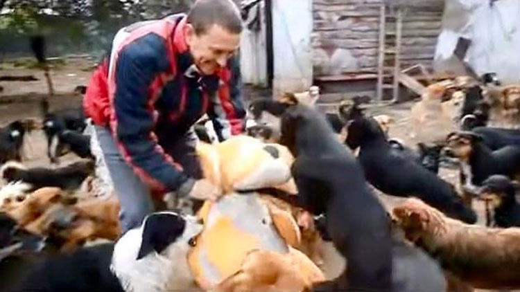 Este hombre odia ver a los perros que sufren, por eso ha salvado a 450 de ellos