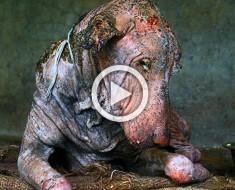 Este pobre perro había perdido la esperanza... ¿Pero qué pasó después de que le mostraran el amor? ¡Ni siquiera lo reconocen!