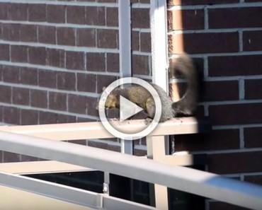 Estaba filmando a una ardilla desde su casa cuando ésta hizo algo que lo IMPRESIONADO