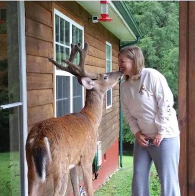 Su enfermo y viejo padre está listo para decir adiós, ahora mira lo que hace un ciervo...