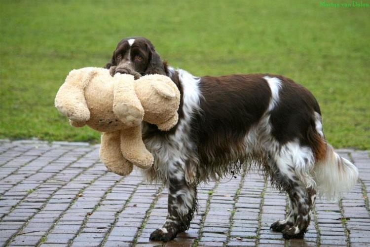 Cuando su perro hace esto, está tratando de comunicar algo MUY IMPORTANTE