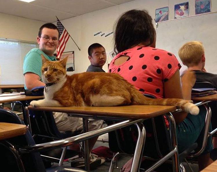 Este gato espera aquí todos los días. ¿Y cuando la puerta se abre? Prepárate para una gran sorpresa